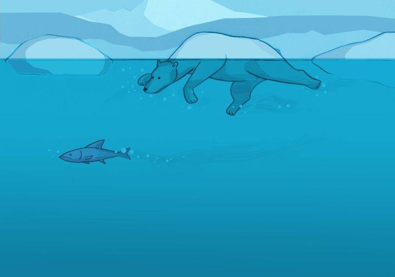 a caccia di salmoni